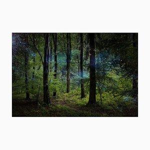 Stars 9, Ellie Davies, Photography, 2014