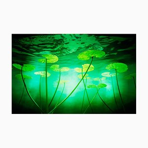 Lillies, Chris Frazer Smith, Floral, Fotografie, 2000-2015