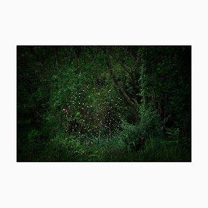 Stars 2, Ellie Davies, Wald Imagery, Fotografie