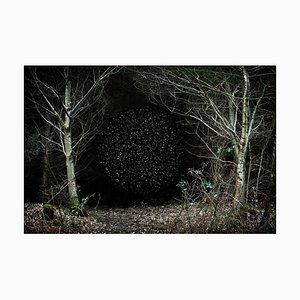 Stars 12, Ellie Davies, Fotografie, 2014