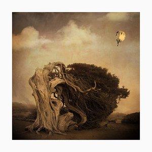 Rosa Basurto, Primo Tempo 6, fotografía de paisaje