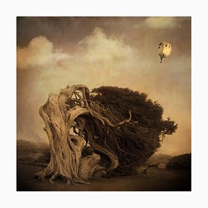 Rosa Basurto, Primo Tempo 6, Landscape Photograph