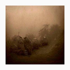 Rosa Basurto, Primo Tempo 4, Nature Imagery, Landscape Photograph