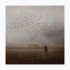 Looking to the Sky 3, Rosa Basurto, Birds, Portrait