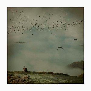 Looking at Sky 8, Rosa Basurto, Nature