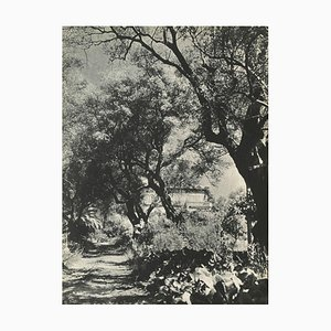Renoirs Garden by Willy Maywald for Revue Verve