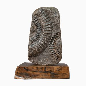 Vintage Decorative Ammonite Fossil Geological Ornament with Oak Base