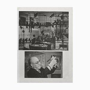 Henri Matisses Birds by Brassaï by Revue Verve