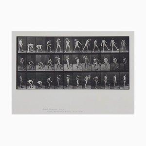 Locomoción Animal Eadweard Muybridge, plato 317, 1887