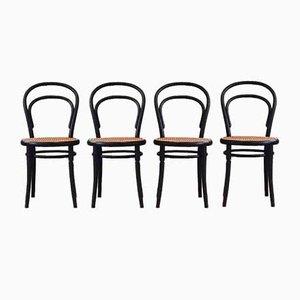 No. 14 Esszimmerstühle von Michael Thonet für Ligna, 1960er, 4er Set