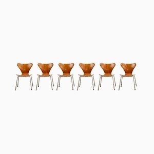 Mid-Century Teak Series 7 Stühle von Arne Jacobsen für Fritz Hansen, Dänemark, 1950, 4er Set