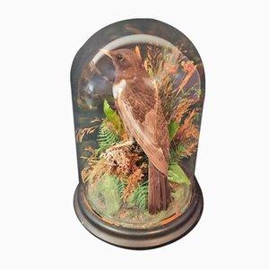 Napoleon III Wedding Globe with Bird