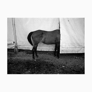 Pferd drucken