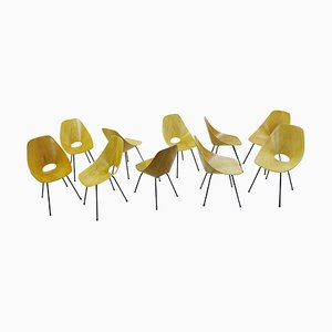 Medea Dining Chairs in Ash by Vittorio Nobili for Tagliabue, 1950s, Set of 10