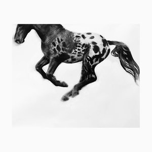 Hocus Focus, Dynamic Realistic Horse Drawing, Kohle auf Papier, 2019