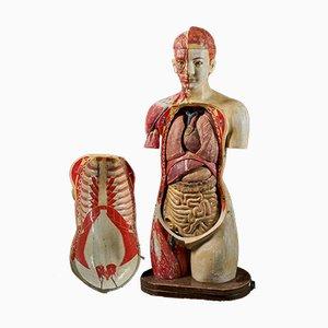 Lebensgroßes weibliches anatomisches Modell von Shimadzu Company, Kyoto, Japan, 1934