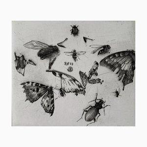 Krzysztof Skórczewski, Insects Rural Sketches, 2011