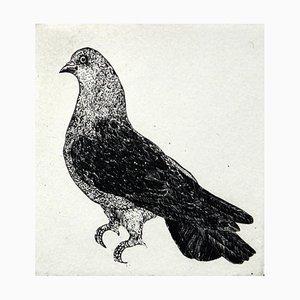 Cajetan Karczewski, A Dove, 2017