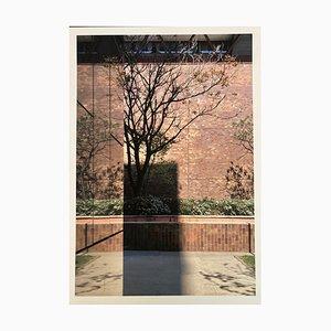 Just aa Tree, Fine Art Print, 20er Set