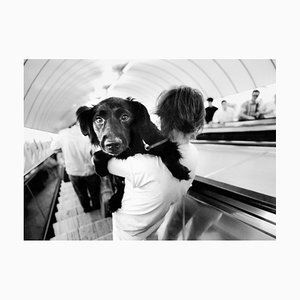 Ian Sanderson, Metro Dog, Archival Pigment Print, 1992
