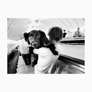 Imprimé Pigmentaire d'Archivage de Ian Sanderson, Metro Dog, 1992