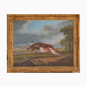 Hound Coursing a Stag von Jonathan Adams, 2011