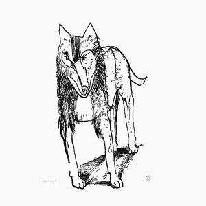 Zdzislaw Windhund von Marta F., 1997