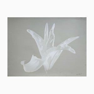 Czeslaw Czaplinski Lily, 1995