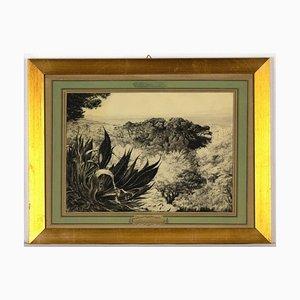 Dessin Inconnu, Paysage, Crayon et Fusain, 1952