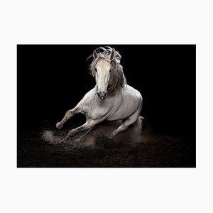 Ehpico D'Atela Purebred Lusitano Stallion #1, Signed Limited Edition Print, 2018