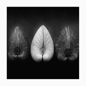 Palourdes par Ian Sanderson -1984 - Tirage Signé Édition Limitée à Pigments, édition de 5, Format Carré