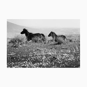 Laurent Campus, Wild Horse, Cavallini 02, Signed Limited Edition Print, Black and White, 2015