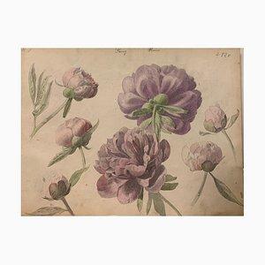 Desconocido, peonías, acuarela, 1885