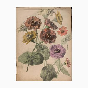 Inconnu, Zinnias, Aquarelle, 1885
