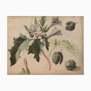 Desconocido, Flores, Acuarela, 1885
