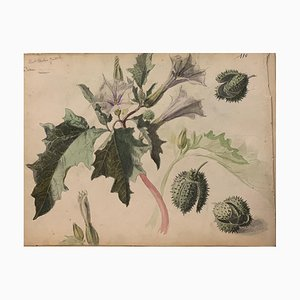 Inconnu, Fleurs, Aquarelle, 1885