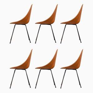 Model Medea Chairs by Vittorio Nobili for Fratelli Tagliabue, Set of 6
