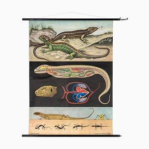 Póster vintage de la lagartija de Jung, Koch, & Quentell para Hagemann, 1966