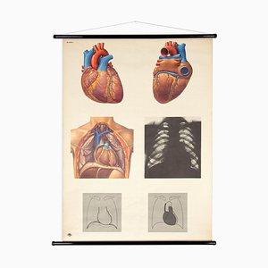 Mapa del corazón humano de Lehrtafel School vintage de DHM Dresden, RDA Poster, años 70