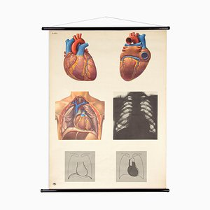 Vintage Lehrtafel School Wall Map of the Human Heart from DHM Dresden, GDR Poster, 1970s