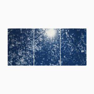 Sonnenlicht durch Waldniederlassungen, Cyanotypie Triptychon Druck, 2020