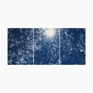 Sunlight Through Forest Branches, Cyanotype Triptych Print, 2020