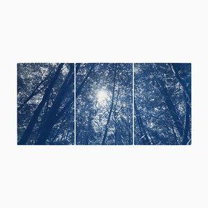 Blaues Wald Triptychon, Blick nach oben durch die Bäume, Cyanotypie Druck in Limitierter Auflage, 2021