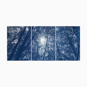 Triptyque Blue Forest, Looking Up Through the Trees, Edition Limitée Cyanotype Print, 2021