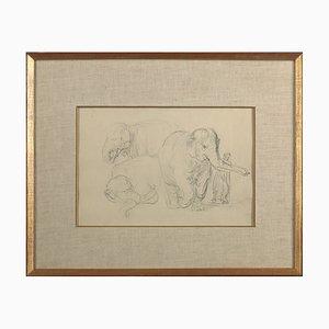 Litografía con tres estudios de un elefante de Rembrandt Van Rijn