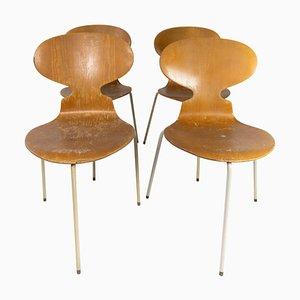 Sedie Ant modello 3101 in legno chiaro di Arne Jacobsen per Fritz Hansen, anni '50, set di 4