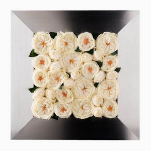 Mix Rose Cornice Set von Vgnewtrend