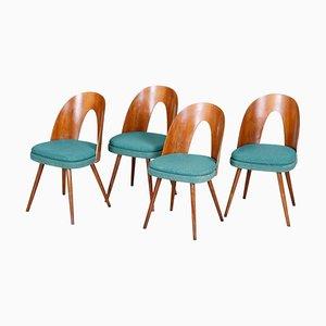 Czech Blue and Brown Ash Chairs by Antonín Šuman, 1950s, Set of 4