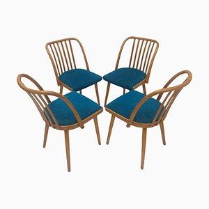 Czechoslovakian Retro Chairs by Antonín Šuman for Ton, 1960s, Set of 4