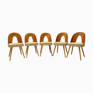Mid-Century Dining Chairs by Antonin Suman for Tatra Nábytok, Set of 5